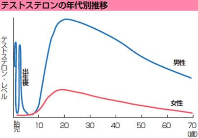 テストステロンの年代別推移
