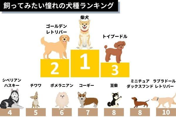 ・飼ってみたい憧れの犬種ランキング!1位は「柴犬」